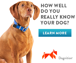 Dognition Affiliate Banner 300x250